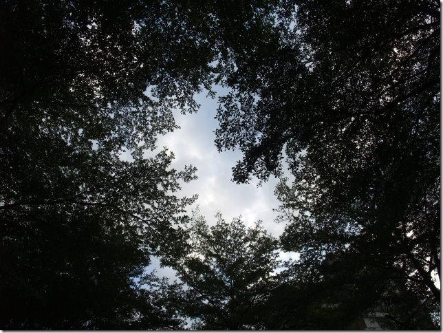 公園樹葉中間的一片天