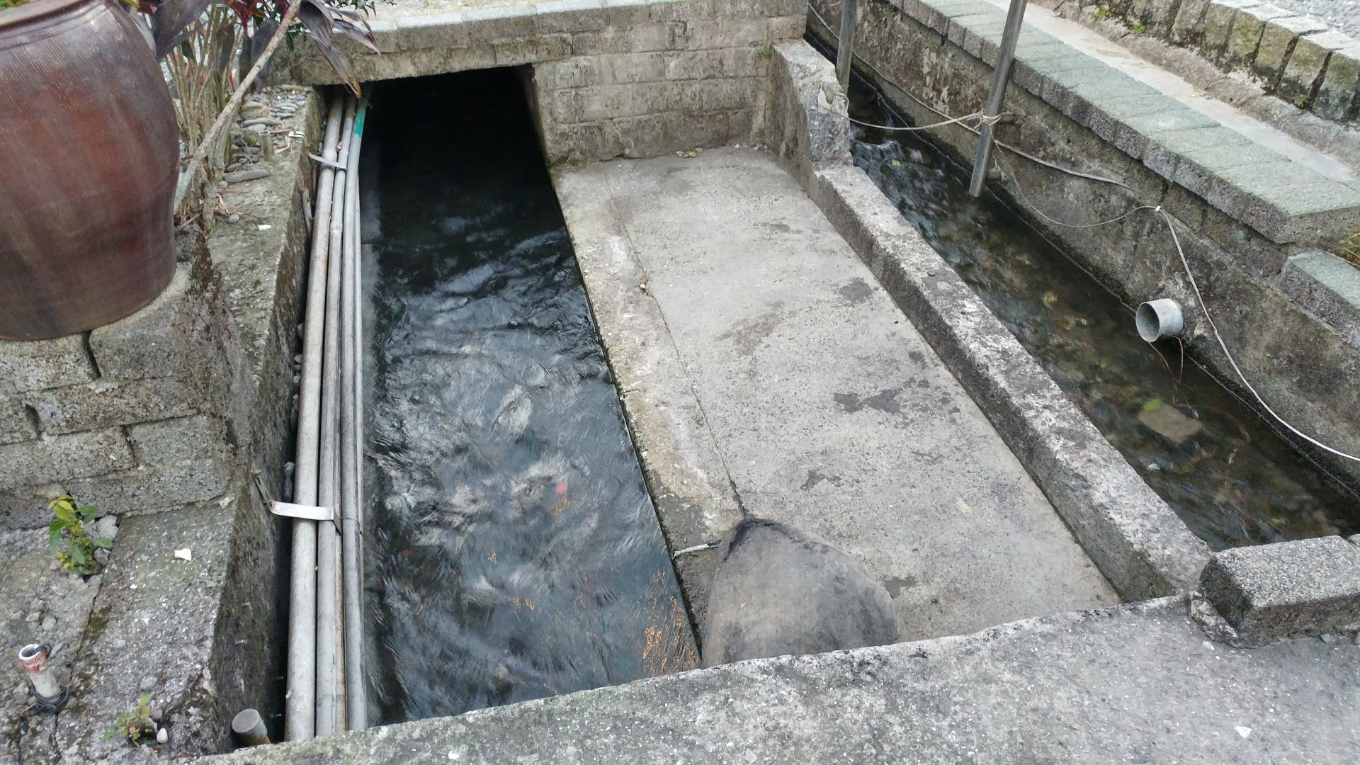 宜蘭的山泉水
