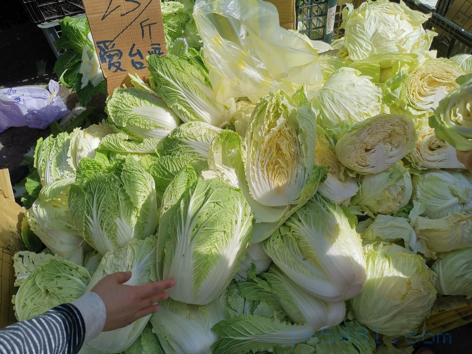 1臺斤25的台灣白菜跟高麗菜,攤販說黃心的就是高山蔬菜的證明