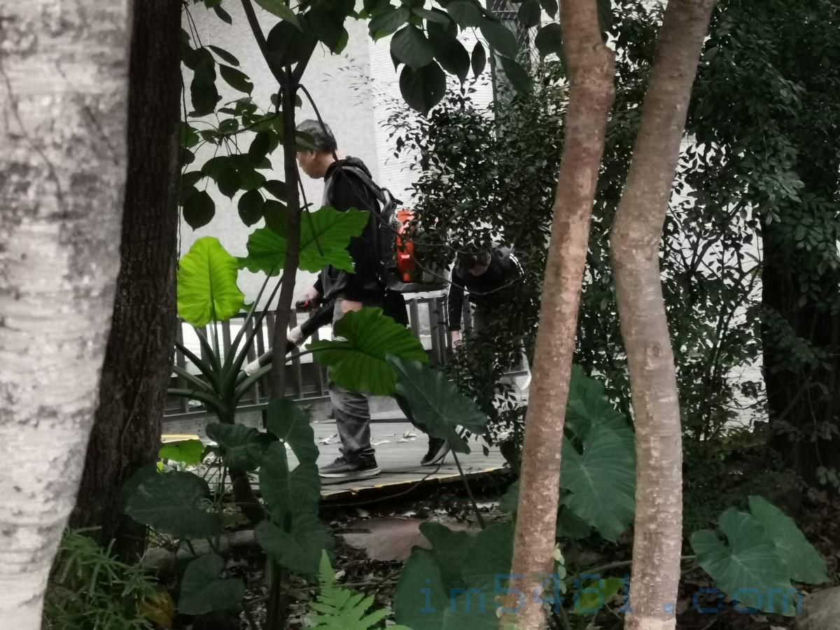 北科大聘雇的清潔人員用拿環境用藥噴霧機吹落葉