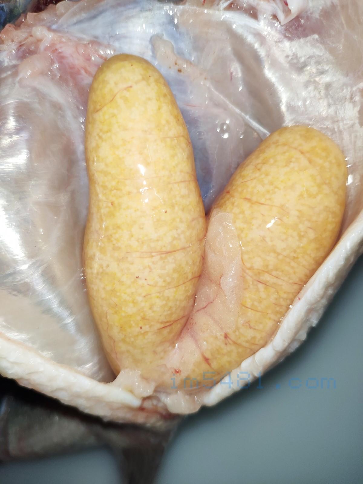 檸檬加州鱸魚魚卵