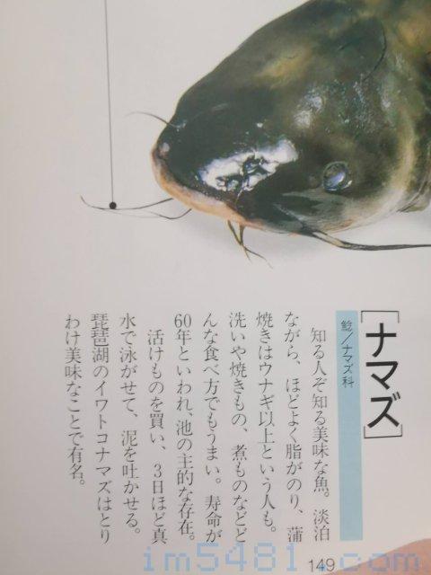 魚の目利食通事典(講談社)-鯰魚