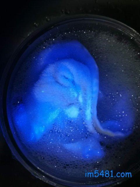廚房抹布被卡住了螢光增白劑,還洗不掉!